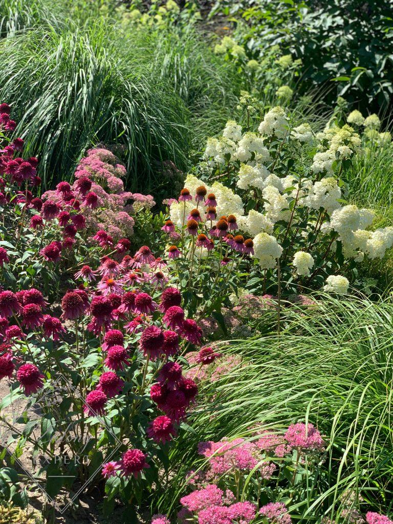 Trawy ozdobne i byliny