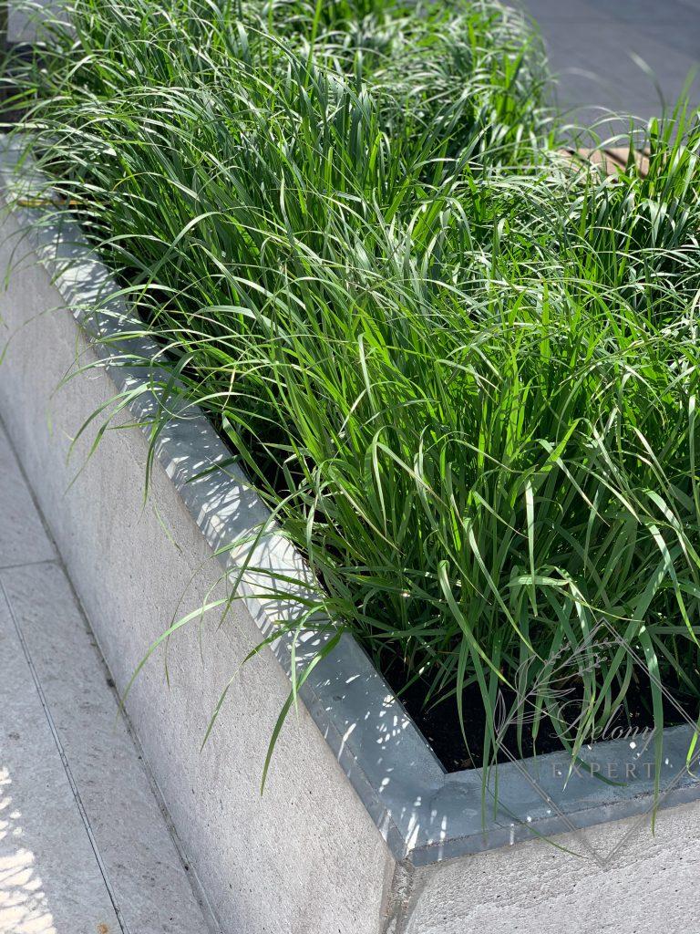 Trawy ozdobne w donicach